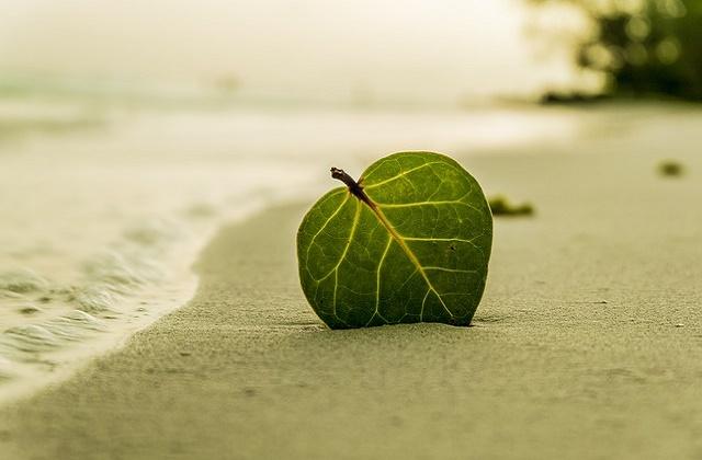 知多半島では楽しい思い出を作れる