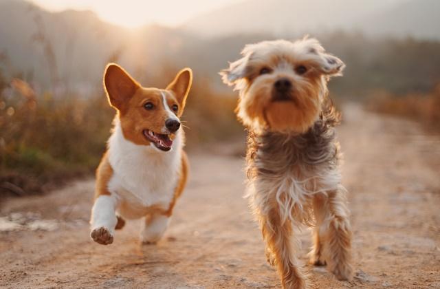 小型犬も運動・散歩は必要