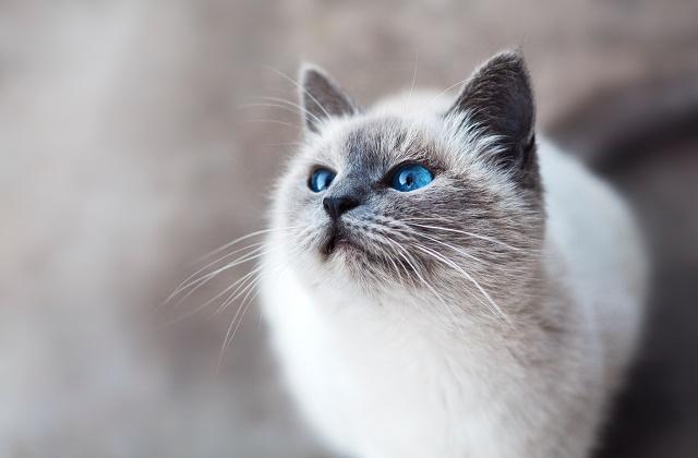 猫あるあるはさまざま